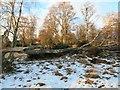 NJ5500 : A windfall on Deeside by Stanley Howe