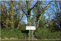 NS4927 : Trees at Loudoun Street Car Park by Billy McCrorie