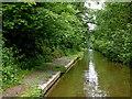 SJ6930 : Woodseaves Cutting south-east of Market Drayton, Shrosphire by Roger  Kidd