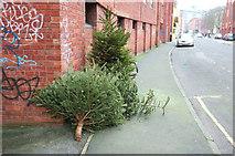 ST5973 : Christmas trees, Bristol by Derek Harper