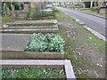 TQ2886 : Snowdrops in Highgate Cemetery by Marathon