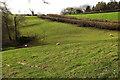 SX8561 : Valley by Old Widdicombe Lane by Derek Harper