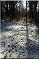 SX9081 : Snow, Haldon Forest by Derek Harper