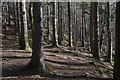 NT3361 : Woods by the South Esk by Jim Barton