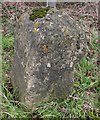 ST8455 : Old Milestone by M Faherty