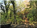 SJ1962 : A walk in the park by Eirian Evans