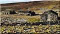 HU4455 : Croft at Flamister by David Nicolson