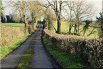 H5956 : Neatly trimmed hedge, Keady by Kenneth  Allen