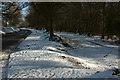 SX9081 : Road and track, Haldon Forest by Derek Harper