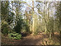 TQ2354 : Woodland paths on Banstead Heath by Malc McDonald