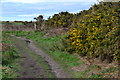 SZ2592 : Path and gorse bushes above Beckton Bunny by David Martin