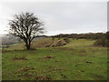 TQ2452 : Colley Hill, near Reigate by Malc McDonald
