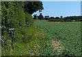 TM5084 : Farmland near Church Farm by Mat Fascione
