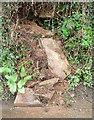 SW9770 : Collapsing bank, Pawton Mill by Derek Harper