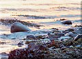 NH6548 : Redshank on the shoreline at North Kessock by valenta