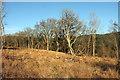 SX8684 : Trees near Higher Bramble by Derek Harper