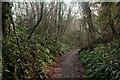 ST8210 : Wessex Ridgeway descending through Eastcombe Wood by Chris Heaton