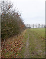 TF8905 : Hedge bordering Ashill Common by David Pashley