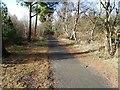 NZ2242 : Deerness Valley Railway Path near Ushaw Moor by Clive Nicholson