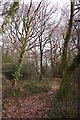 TQ4049 : Path On Merle Common by Glyn Baker