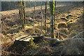 SX8684 : Tree stumps near Kiln Brake by Derek Harper