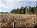 TL8193 : Corner of meadow with forest in background by David Pashley