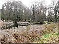 TL8293 : Two bridges at Lynford Lakes by David Pashley