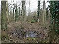 TL8293 : Wet woodland by David Pashley