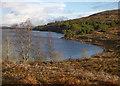 NH4436 : Trees by Loch Bruicheach by Craig Wallace