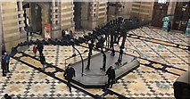 NS5666 : 'Dippy' the Diplodocus by Bill Kasman