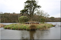 NS2209 : Island at the Swan Pond by Billy McCrorie