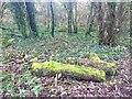 SS4887 : Luminous logs by Alan Hughes