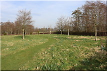 NS5036 : Meadow and Woodland Burial Site, Galston by Billy McCrorie
