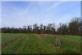 ST8209 : The Wessex ridgeway path in Blandford Forest by Tim Heaton