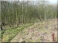SE0825 : Path into woodland off Shroggs Road by Humphrey Bolton