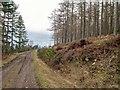 NH6049 : Gallowhill Wood by valenta