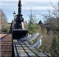 NZ2666 : Dove from above, Jesmond Dene by Paul Harrop