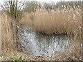 TL3369 : Paddy's Pond, Fenstanton by M J Richardson