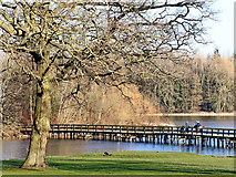 SJ8000 : Walkway across The Great Pool in Patshull Park by Roger  Kidd