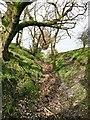 SJ9994 : Public footpath in a hollow by Graham Hogg