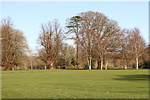 SJ8000 : Golf course and woodland in Patshull Park, Staffordshire by Roger  Kidd