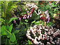 TQ1877 : Kew Gardens orchid festival, models of scarlet ibis by David Hawgood
