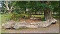 SU3504 : Bench / log near Frame Heath Inclosure by Phil Champion