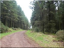ST1735 : Path between conifers in The Slades by David Smith