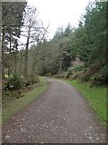 ST1736 : Track in Quantock Combe and Great Wood by David Smith