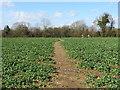 TQ4658 : Path through a field, Knockholt by Malc McDonald