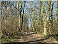 SJ3248 : Track to Erddig Castle by Jeff Buck