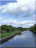 SJ8842 : Canal east of Hanford, Stoke-on-Trent by Roger  Kidd