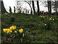 SK3582 : Spring colour at a wet & windy parkrun by Graham Hogg