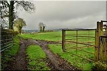 H6058 : Tracks to field, Tullylinton by Kenneth  Allen